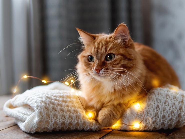 Kissa valojen kanssa