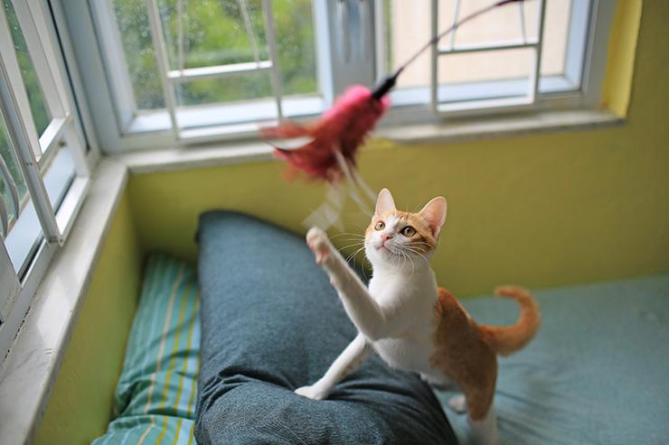 Kissa leikkii