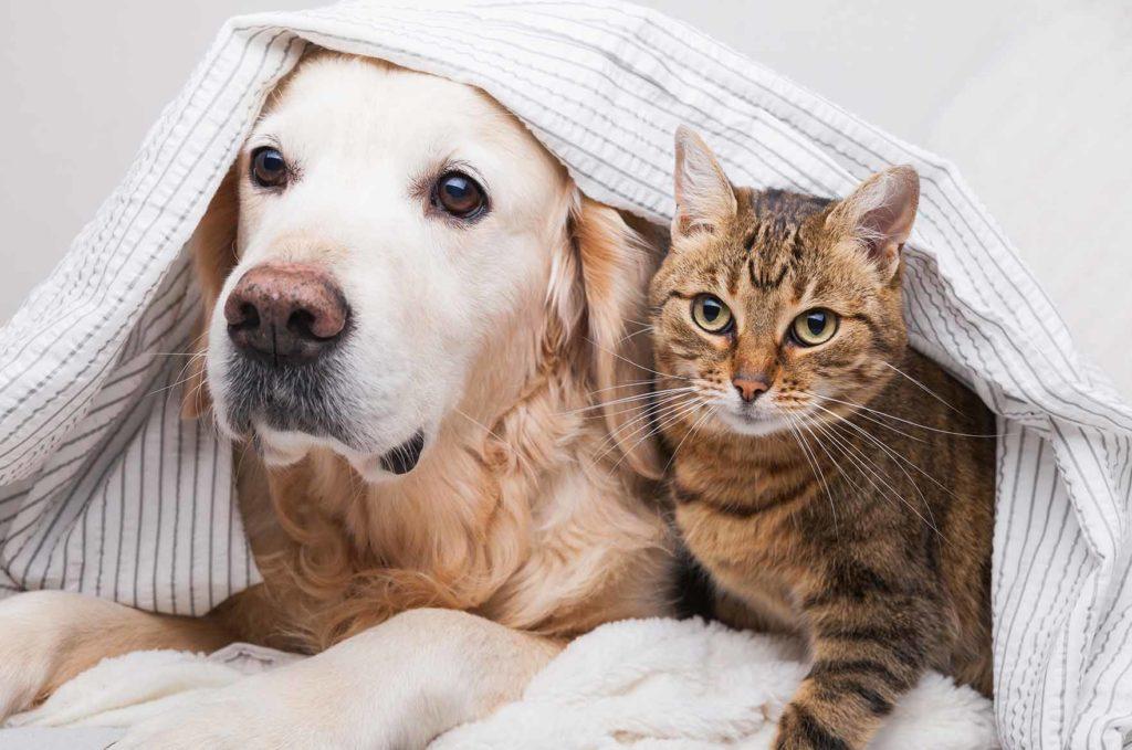 koira ja kissa