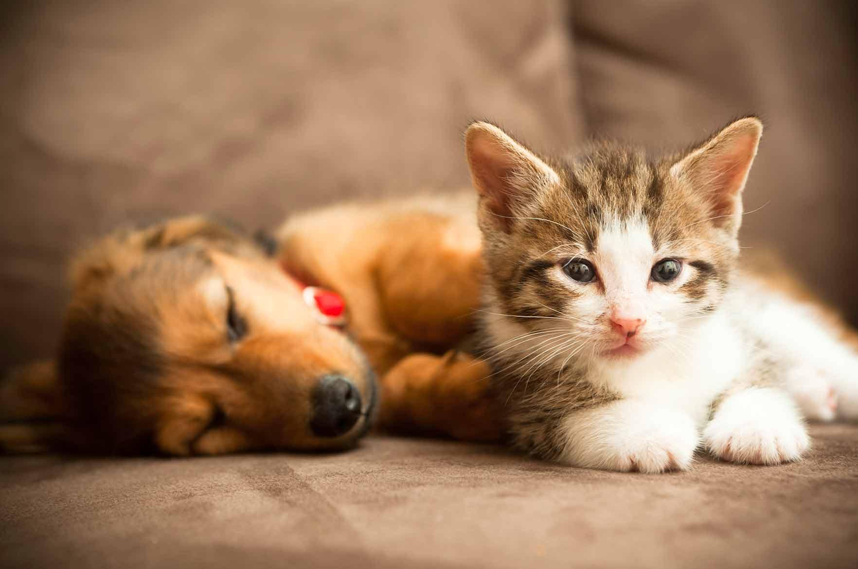 Giardia kissa Molnar Kinga Bevezetes Az Allattanba