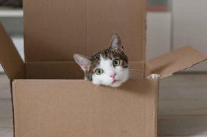 kissa pahvilaatikossa