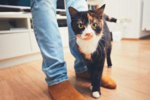 Kissa jaloissa
