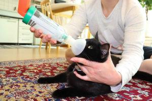 Kissan astman hoito