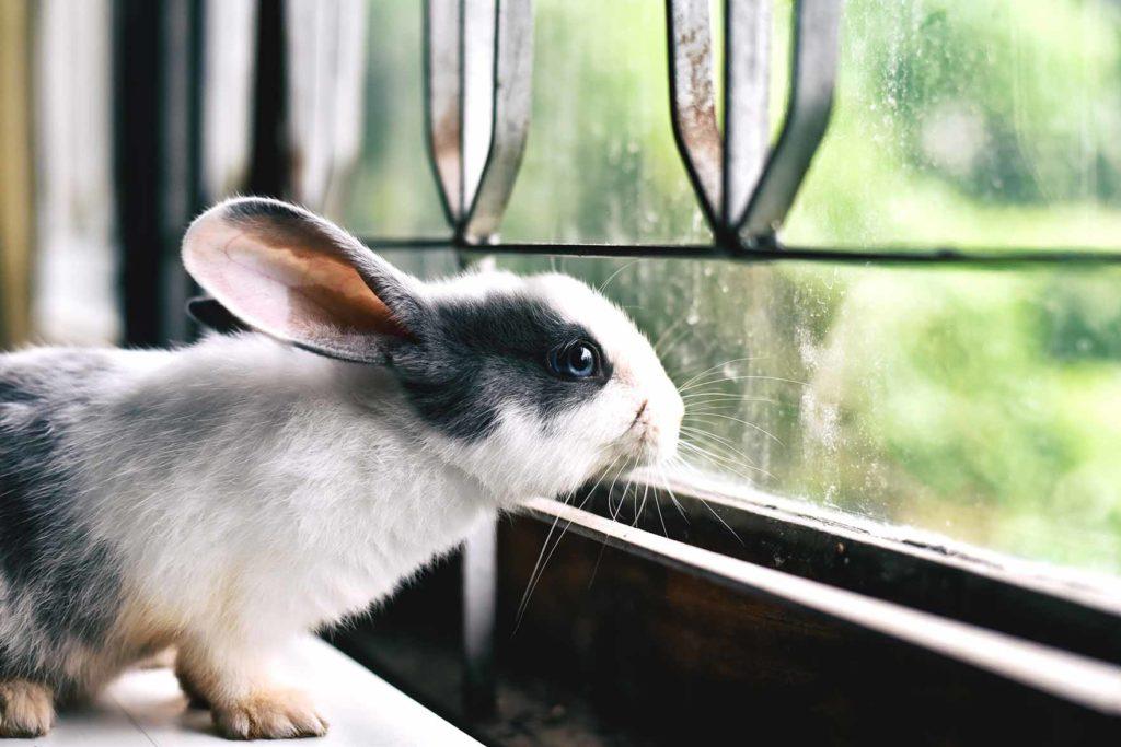 Kani katsoo ulos ikkunasta