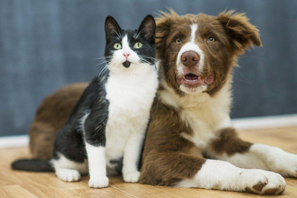 Kissa ja koira istuvat vierekkäin lattialla.