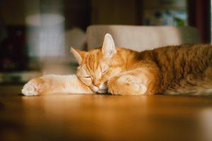 Oranssi kissa nukkuu pöydällä aurinkoisessa kohdassa