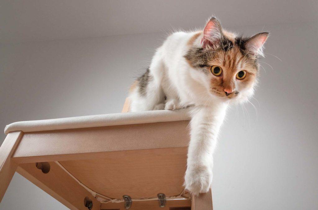 Kissa valmistautuu hyppäämään tuolilta alas.